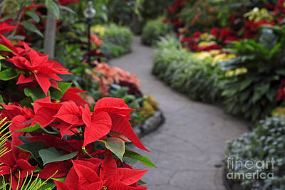 Photograph - Christmas Garden by Charline Xia