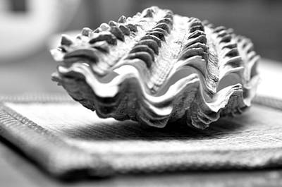 Photograph - Clam Shell  by Puzzles Shum