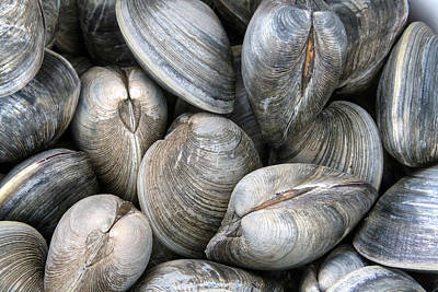 Bushel Photograph - Clams by Heidi Piccerelli