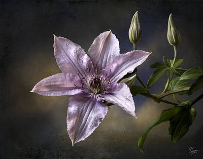 Photograph - Clematis by Endre Balogh