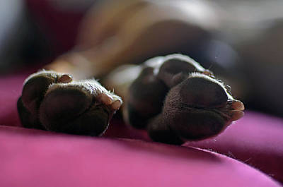 Close Up Of Dog Paws While Sleeping Art Print by Nano Calvo
