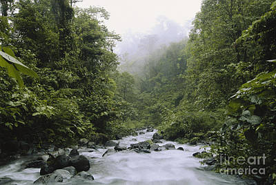 Cloud Forest, Costa Rica Art Print by Gregory G. Dimijian, M.D.