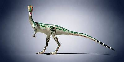 Coelophysis Photograph - Coelophysis by Sciepro