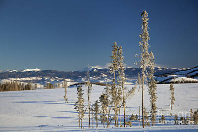 Photograph - Colorado Winter by Jim West