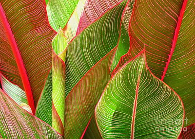 Photograph - Colorful Leaves by Ranjini Kandasamy