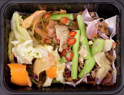 Waste Photograph - Composting Kitchen Waste by Sheila Terry