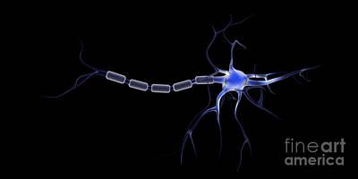 Neuroscience Digital Art - Conceptual Image Of A Neuron by Stocktrek Images