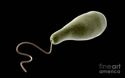 Conceptual Image Of Euglena Art Print by Stocktrek Images