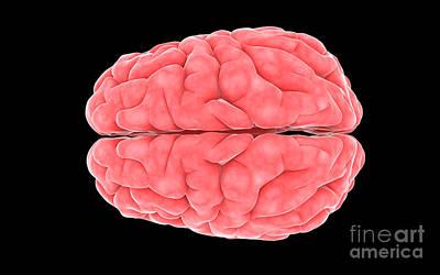 Neuroscience Digital Art - Conceptual Image Of Human Brain by Stocktrek Images