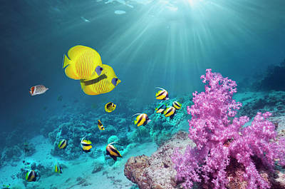 Photograph - Coral Reef With Butterflyfish by Georgette Douwma