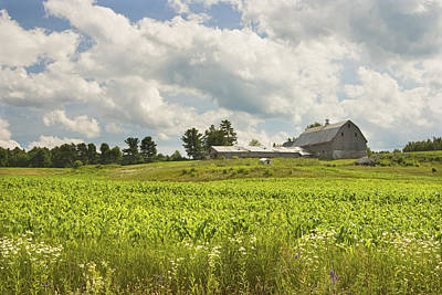 Photograph - Corn Growing In Maine Farm Field by Keith Webber Jr