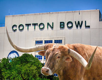 Longhorn Photograph - Cotton Bowl by David and Carol Kelly
