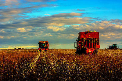 Cotton Harvest Art Print