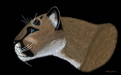 Digital Art - Cougar Portrait by Walter Colvin