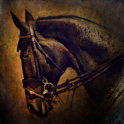 Friesian Digital Art - Cover Girl by Lyndsey Warren