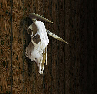 Digital Art - Cow Skull by James Larkin