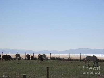 Photograph - Cows And Horses In Tarifa by Chani Demuijlder