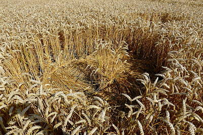 Photograph - Crop Circle Close-up by Denise Mazzocco