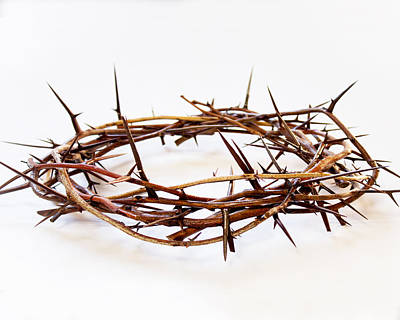 Photograph - Crown Of Thorns  by Dee  Savage