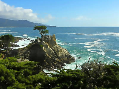 Photograph - Cypress Point by Rich Stedman