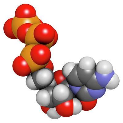 Triphosphate Photograph - Cytidine Triphosphate Molecule by Molekuul