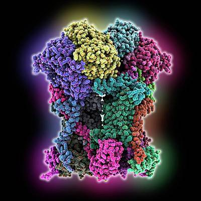 Oxidation Photograph - Cytochrome Bc1 Molecule by Laguna Design