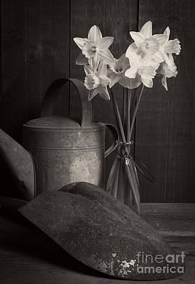 Art Glass Photograph - Daffodils by Edward Fielding