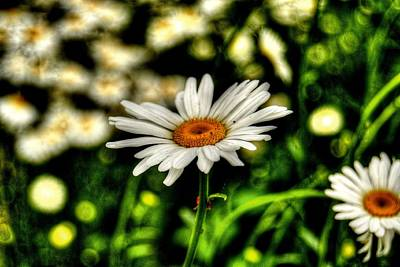 Photograph - Daisies by Amber Summerow