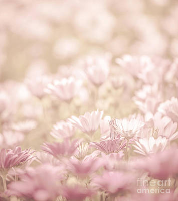 Merging Photograph - Daisy Flowers Field by Anna Om