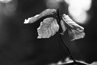 Photograph - Dancer by Randi Grace Nilsberg
