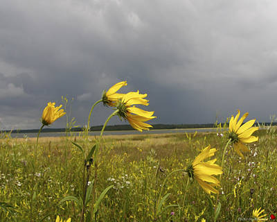 Photograph - Dancing Before The Storm by Rhonda McDougall