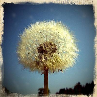 Summer Photograph - Dandelion And Blue Sky by Matthias Hauser