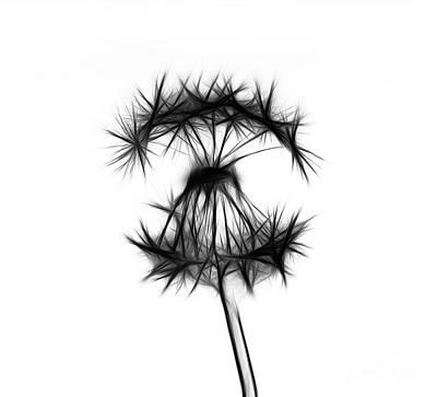 Dandelion Digital Art - Dandelion by Michal Boubin