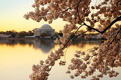 Photograph - Dawn Over The Jefferson Memorial  by Brian Jannsen