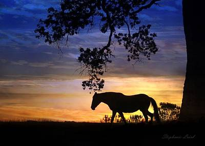 Paso Fino Photograph - Day's End by Stephanie Laird