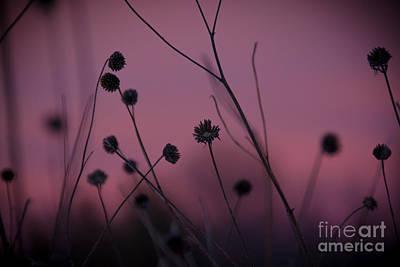Photograph - Dead Beauty by Cheryl Baxter