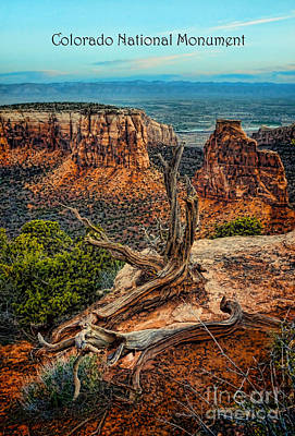 Ledge Photograph - Dead Tree On Cliff Overlooking View Of Buttes by Jill Battaglia