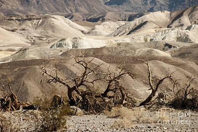 Bare Trees Photograph - Death Valley by Juli Scalzi