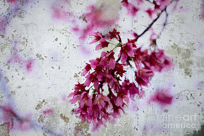 Deep Pink Flowers With Grey Concrete Texture Background Art Print