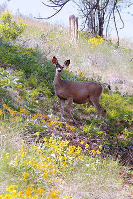 Art Print featuring the photograph Deer In Wildflowers by Athena Mckinzie