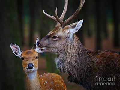 Photograph - Deer Love by Nick  Biemans