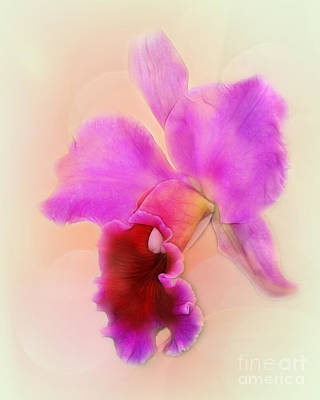 Photograph - Delicate by Judi Bagwell