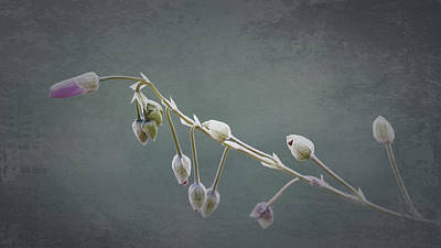 Photograph - Delicate by Parrish Todd