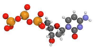 Triphosphate Photograph - Deoxycytidine Triphosphate Molecule by Molekuul