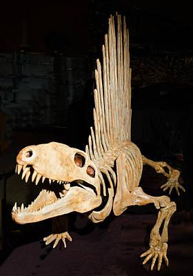 Photograph - Dimetrodon Fossil by Millard H. Sharp