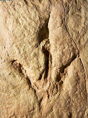Photograph - Dinosaur Footprint Fossil by Millard H. Sharp