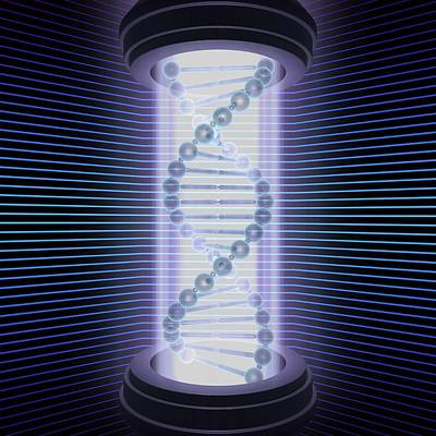 Double Helix Photograph - Dna Double Helix by Ktsdesign