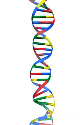 Dna, Ribbon Model Art Print