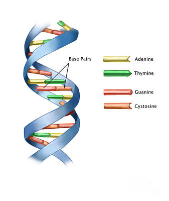 Info Graphic Photograph - Dna by Spencer Sutton