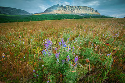 Photograph - 2 Dog Flats With Lupine Glacier National Park  Painted by Rich Franco